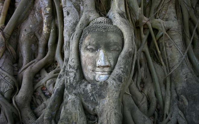 arbre-bouddha
